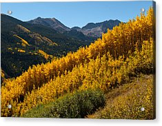 Acrylic Print featuring the photograph Autumn Aspen Near Castle Creek by Cascade Colors