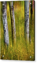 Acrylic Print featuring the photograph Autumn Aspen Recollections by John De Bord