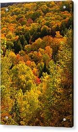 Autumn At Acadia Acrylic Print