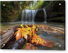 Autumn At Hidden Falls Acrylic Print by David Gn