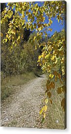 Autumn At Iron Creek Acrylic Print
