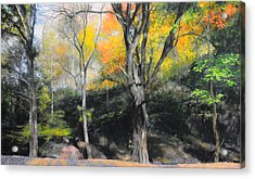 Autumn At Loggerheads Acrylic Print by Harry Robertson