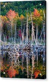 Autumn At Moosehead Bog Acrylic Print