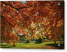 Autumn At The In Forest Park St Louis Missouri Acrylic Print by Garry McMichael