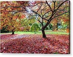 Autumn At Westonbirt Arboretum Acrylic Print