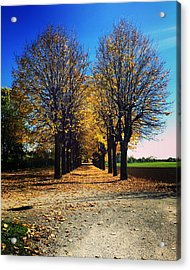 Autumn Avenue Acrylic Print by Niki Mastromonaco