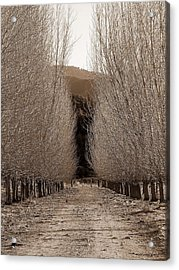Autumn Bares Her Trees Acrylic Print