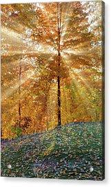 Autumn Beams Acrylic Print
