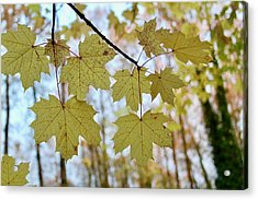Autumn Beauty Acrylic Print
