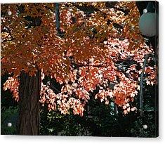 Autumn Beauty Acrylic Print by Martin Morehead