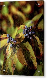 Autumn Berries 6047 Dp_2 Acrylic Print