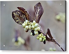 Autumn Berries And Foliage Acrylic Print