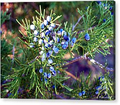 Acrylic Print featuring the photograph Autumn Berries by Betty Northcutt