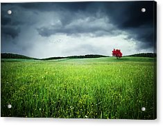 Acrylic Print featuring the photograph Autumn by Bess Hamiti