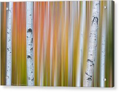 Acrylic Print featuring the photograph Autumn Birch Abstract by Expressive Landscapes Fine Art Photography by Thom