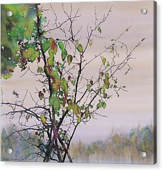 Autumn Birch By Sand Creek Acrylic Print