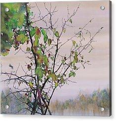 Autumn Birch By Sand Creek Acrylic Print by Carolyn Doe