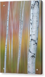 Acrylic Print featuring the photograph Autumn Birch Impressions by Expressive Landscapes Fine Art Photography by Thom