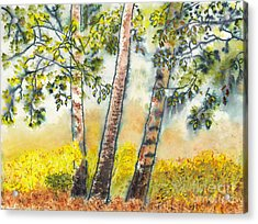 Autumn Birch Trees Acrylic Print