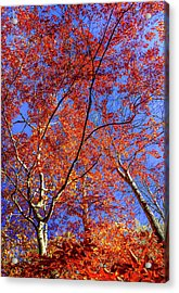 Acrylic Print featuring the photograph Autumn Blaze by Karen Wiles
