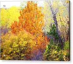 Autumn Blaze  Acrylic Print