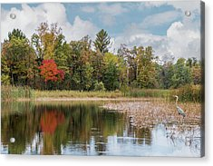 Acrylic Print featuring the photograph Autumn Blue Heron by Patti Deters