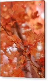 Acrylic Print featuring the photograph Autumn Blush by Diane Alexander