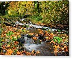 Autumn Bridge Acrylic Print by Mike Dawson