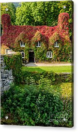 Autumn Brilliance Acrylic Print by Adrian Evans