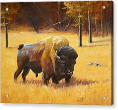 Autumn Bull Acrylic Print by Patrick Entenmann