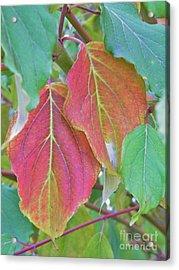 Autumn Bush Leaf Pair     Indiana    October Acrylic Print