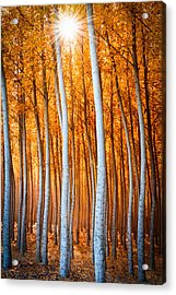 Acrylic Print featuring the photograph Autumn Canopy Burst by Dan Mihai