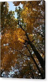 Autumn Canopy Acrylic Print by Shari Jardina