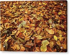 Autumn Carpet Acrylic Print