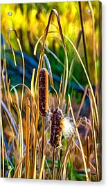 Autumn Cattails - Paint Acrylic Print