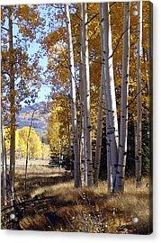 Autumn Chama New Mexico Acrylic Print by Kurt Van Wagner