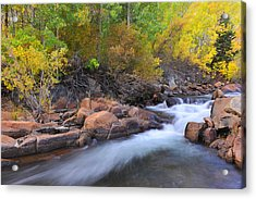 Autumn Color In Bishop Acrylic Print by Dung Ma