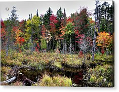 Acrylic Print featuring the photograph Autumn Color In The Adirondacks by David Patterson