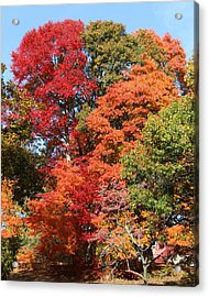 Autumn Color Spray Acrylic Print