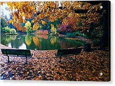 Autumn Color Trees And Fallen Leaves Acrylic Print
