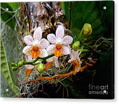 Autumn Colored Orchids Acrylic Print by Sue Melvin