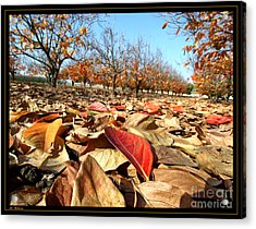 Autumn Colors 04 Acrylic Print by Arik Baltinester