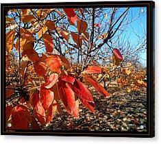 Autumn Colors 06 Acrylic Print by Arik Baltinester