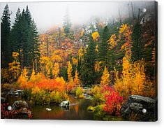 Acrylic Print featuring the photograph Autumn Colors Symphony by Dan Mihai