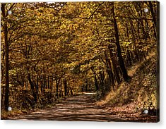 Acrylic Print featuring the photograph Autumn Colours by Nikos Stavrakas