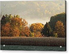 Autumn Cornfield Acrylic Print by Inspired Arts