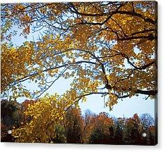 Autumn Cover Acrylic Print by Jo-Anne Gazo-McKim