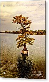 Autumn Cypress Acrylic Print by Scott Pellegrin