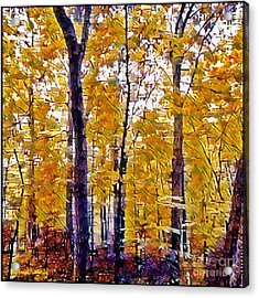 Autumn  Day In The Woods Acrylic Print by MaryLee Parker