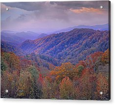 Autumn Deciduous Forest Great Smoky Acrylic Print by Tim Fitzharris